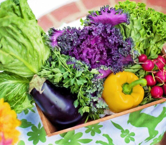 Fertiggerichte in Bio Qualität als Antwort auf ungesunde Ernährungsweise